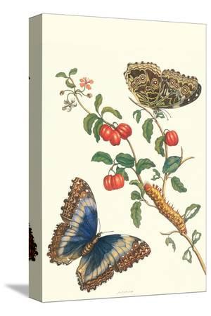 maria-sibylla-merian-barbados-cherry-tree-with-a-moth