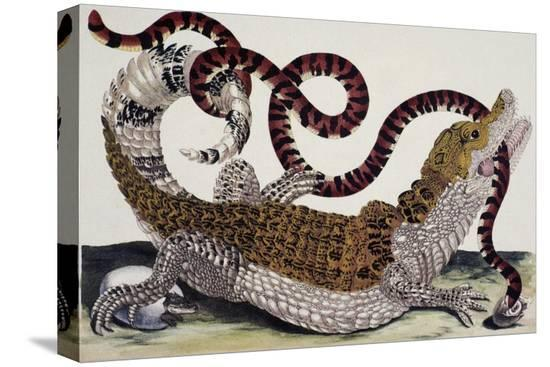 maria-sibylla-merian-crocodile-and-snake