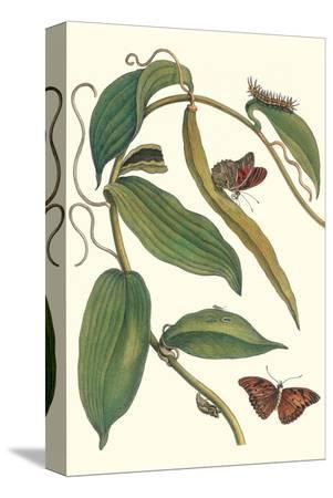 maria-sibylla-merian-flat-leaved-vanila-plant-with-a-gulf-fritillary