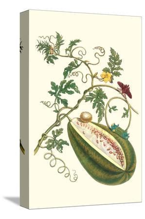 maria-sibylla-merian-watermelon-and-slug-moth