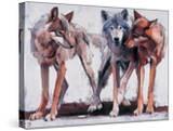 Pack Leaders  2001