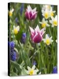 Mixed Spring Bulbs