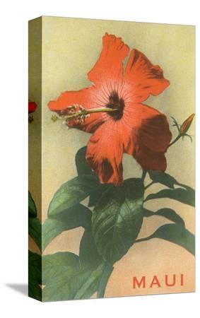 maui-hibiscus-blossom