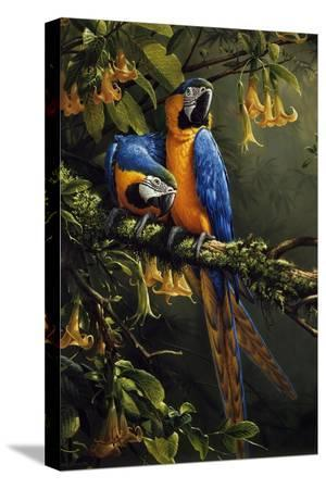 michael-jackson-blue-and-gold-macaw