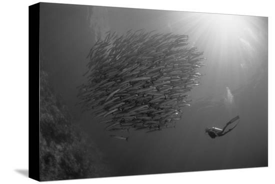 michele-westmorland-indonesia-scuba-diving-in-sea