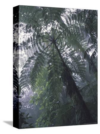 michele-westmorland-monteverde-cloud-forest-costa-rica
