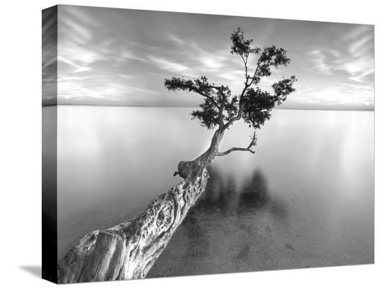 moises-levy-water-tree-xiii