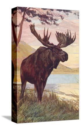 moose-by-lake