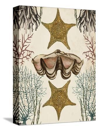 naomi-mccavitt-antiquarian-menagerie-starfish