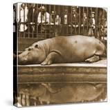 Obaysch the Hippopotamus  London Zoo  1852  by Don Juan  Comte De Montizón