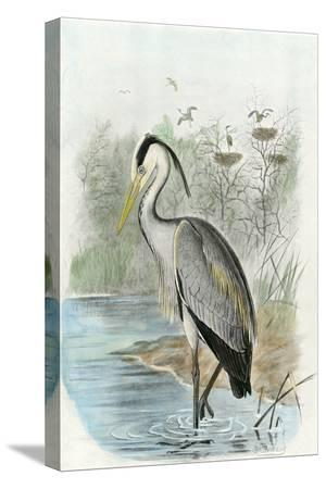 oversize-common-heron
