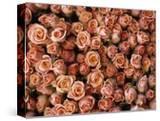 Pink Roses at Albert Kuyp Market