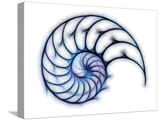 pasieka-sectioned-shell-of-a-nautilus-artwork