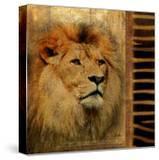 Elegant Safari IV (Lion)