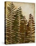 Ferns I