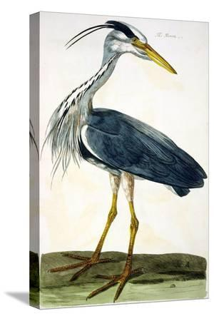 peter-paillou-the-heron-plate-from-the-british-zoology-class-ii-birds
