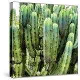 ¡Viva Mexico! Square Collection - Cardon Cactus VIII