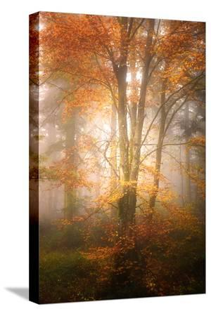 philippe-sainte-laudy-alone-in-the-fog
