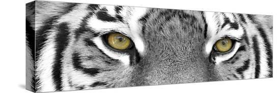 photoinc-tiger