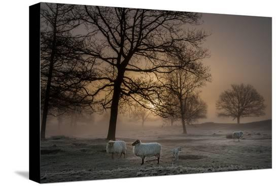 piet-haaksma-foggy-morning