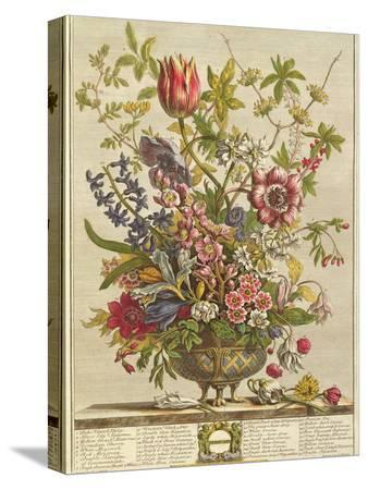 pieter-casteels-february-from-twelve-months-of-flowers-by-robert-furber-c-1674-1756-engraved-by-henry-fletcher