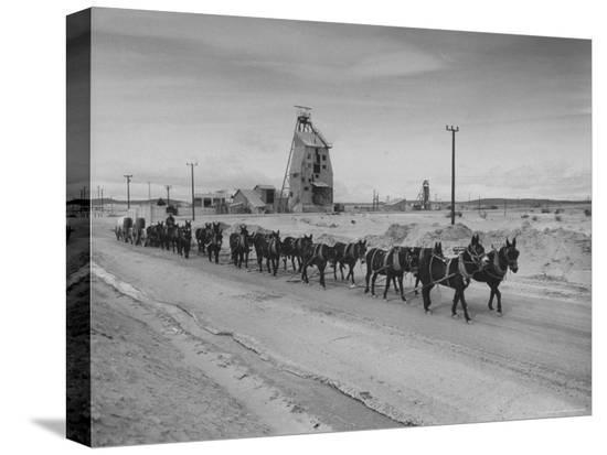 ralph-crane-trademark-twenty-mule-team-of-the-us-borax-co-pulling-wagon-loaded-with-borax
