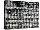 Wall of Skulls in Templo Mayor  Zocalo District  Mexico City  Mexico
