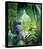 African Grey Parrot  1990