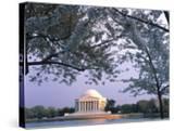 Jefferson Memorial and Cherry Blossoms at Sunrise  Tidal Basin  Washington Dc  Usa