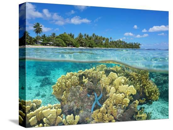 seaphotoart-split-view-over-and-under-water-surface-coral-on-shore-of-huahine-island-french-polynesia