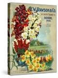 Seed Catalog Captions (2012): WW Rawson and Co  Boston  Massachusetts  1897