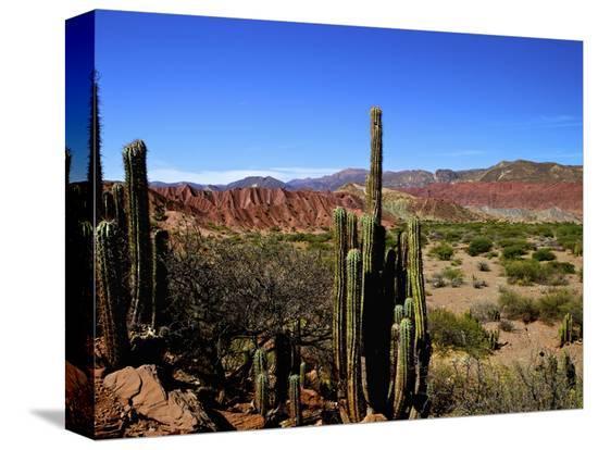 simon-montgomery-cacti-in-canon-del-inca-tupiza-chichas-range-andes-southwestern-bolivia-south-america