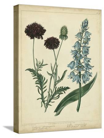 sydenham-teast-edwards-cottage-florals-vi