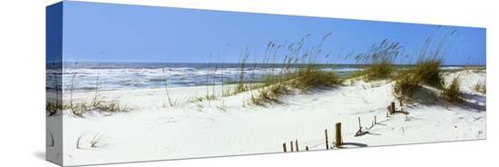 tall-grass-on-the-beach-perdido-key-area-gulf-islands-national-seashore-pensacola-florida-usa