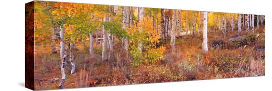 terry-eggers-aspen-grove-autumn-color-logan-canyon-utah-usa
