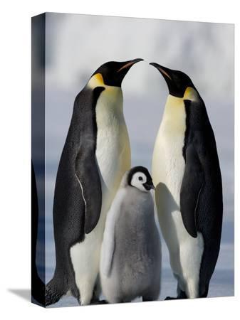 thorsten-milse-emperor-penguins-aptenodytes-forsteri-and-chick-snow-hill-island-weddell-sea-antarctica