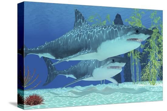 two-megalodon-sharks-from-the-cenozoic-era