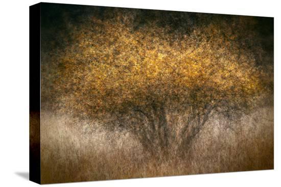 ursula-abresch-fall-impression