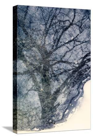 ursula-abresch-tree-on-ice