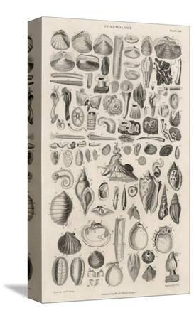 variety-of-sea-shells