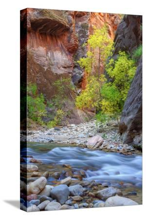 vincent-james-fall-color-in-the-virgin-narrows