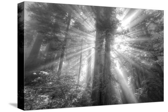 vincent-james-god-beams-and-the-redwoods-black-and-white