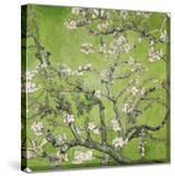 Almond Blossom  1890 (Green Color Variation)