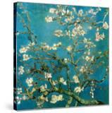 Almond Branches in Bloom  1890