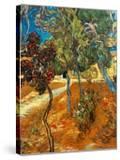 Trees in the Asylum Gardens  Arles  1889
