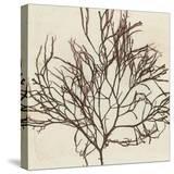 Brilliant Seaweed II