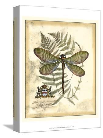 vision-studio-regal-dragonfly-ii