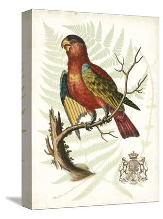 vision-studio-regal-parrots-ii