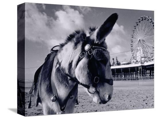 walter-bibikow-donkey-at-shorefront-blackpool-england