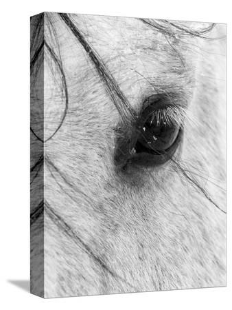 wayne-simpson-a-close-shot-of-a-horses-eye-with-snow-flakes-taken-in-alberta-canada